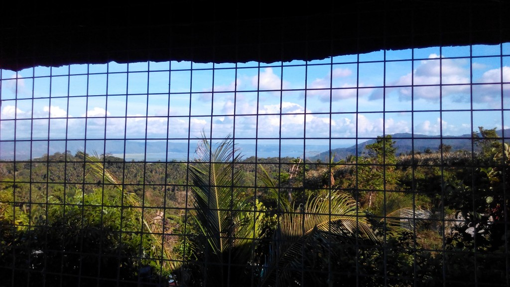 View from my tito's balcony overlooking Laguna Lake (wish I took a photo outside the chicken wire, though).